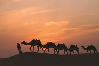 砂漠とラクダ/イメージ